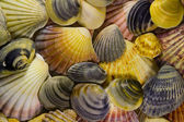 Shells Mosaic — Stock Photo