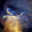 Underwater Turtle World - The Painted Turtle - Stock Photo