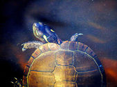 Underwater Turtle World - The Painted Turtle — Stock Photo