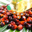Palm Oil fruits — Stock Photo #11334295