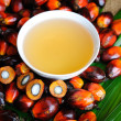 Palm Oil fruits — Foto Stock