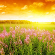 Sunset in a meadow - Stock Photo