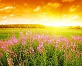 Sunset in a meadow — Stock Photo