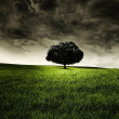 A tree in a field — Stock Photo
