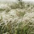 Foto de Stock  : Feather grass in wind against background of fog