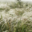 Foto Stock: Feather grass in wind against background of fog