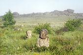 Kamenný idol v stepi — Stock fotografie