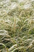 風に羽草 — ストック写真