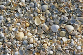 Beach shell sea — Stock Photo