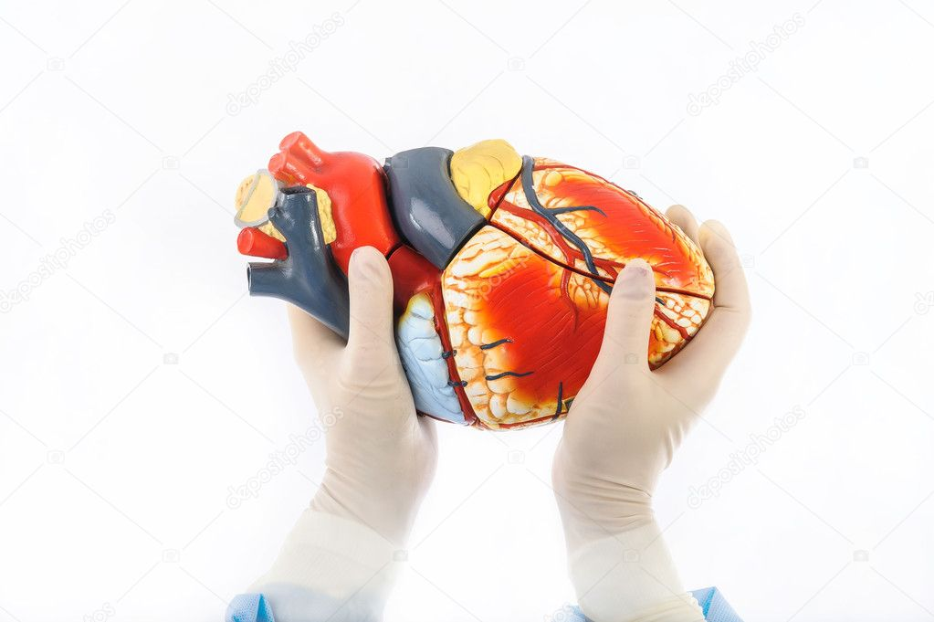 A model of a human heart hold by female hands in sterile gloves — Stock Photo #10757184