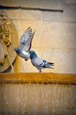 Birds in the Palacio Real Madrid — Stock Photo