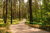 Bench in a pine park — Stock Photo