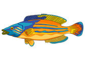 Cuckoo wrasse — Stock Vector