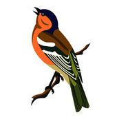 フィンチの鳥の歌 — ストックベクタ