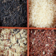 Rice collection - Stock Photo