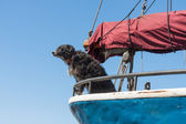 Watchdog is protecting the sailing ship — Stock Photo