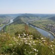 Stock Photo: Bend of Moselle rover near Bremm, Germany