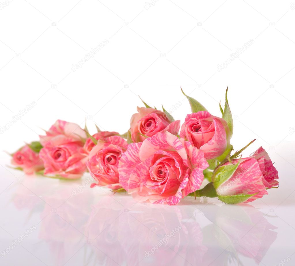 Bouquet of beautiful roses on white background close up  — Stock Photo #10853808