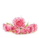 Bouquet de belles fleurs sur fond blanc. — Photo