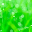 Stock Photo: Natural green background with selective focus