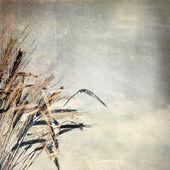 Grunge papierstruktur. abstrakte natur hintergrund — Stockfoto