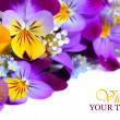 Viola flowers border - Stock Photo