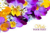 Viola flowers border — Stock Photo