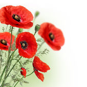 Poppies flowers border — Stock Photo