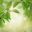 Summer or spring textured background with green leaves, bokeh and sunlight — Stock Photo