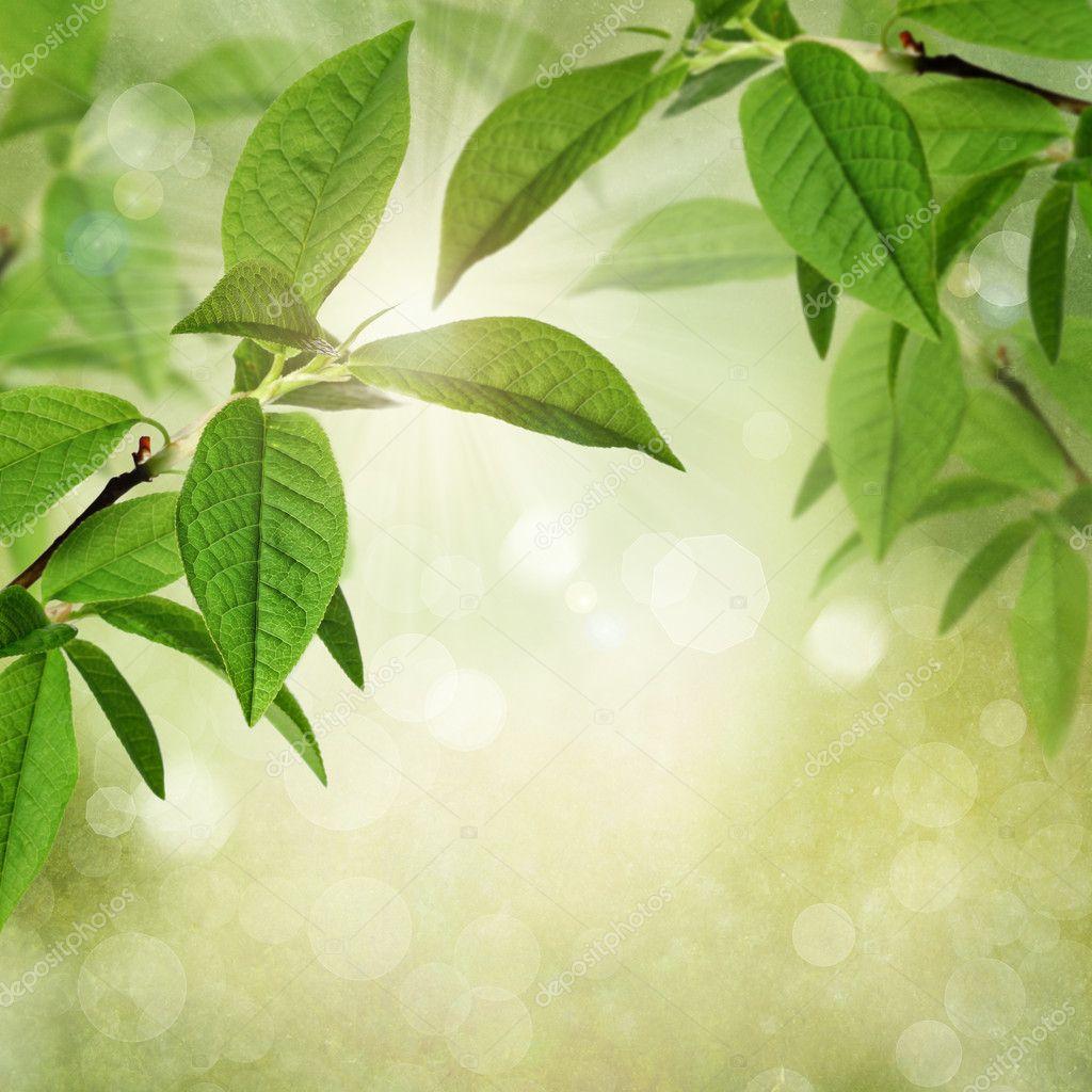 夏天或带纹理的背景与绿色树叶, 散景和阳光的春天