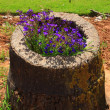 Stock Photo: Flowers inside stump