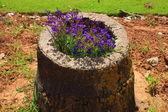 Flowers inside the stump — Stock Photo