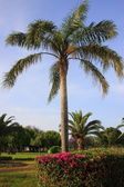 Palm at the Park Leumi - Ramat Gan, Israel — Stock Photo