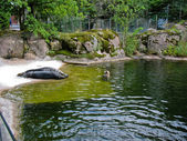 Seal in Skansen — Stock Photo
