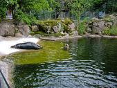Seal in Skansen — Stock Photo