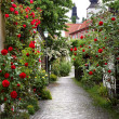 ������, ������: Alley of Roses