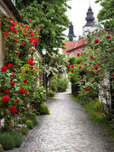 Alley of Roses — Stock Photo