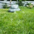 Long grass getting mowed — Stock Photo