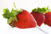 Isolated fruits - Strawberries — Stock Photo