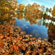 Autumn. Yellow leaves in the lake. - Stock Photo