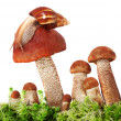 Snail crawling on a group of mushrooms - Foto Stock