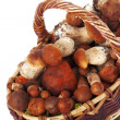 Basket of mushrooms - Stockfoto