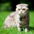 Cute little cat on the nature — Stock Photo
