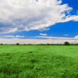 Stock Photo: Green field, blue sky and white clouds