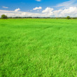 Stockfoto: Green field, blue sky and white clouds