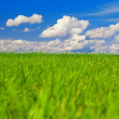 Green field, blue sky and white clouds — Stock fotografie