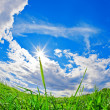 Green field, blue sky and white clouds — Стоковая фотография