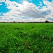 ストック写真: Green field, blue sky and white clouds