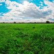 Stock fotografie: Green field, blue sky and white clouds
