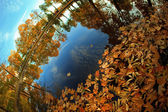 Autumn. Yellow leaves in the lake. — Stock Photo